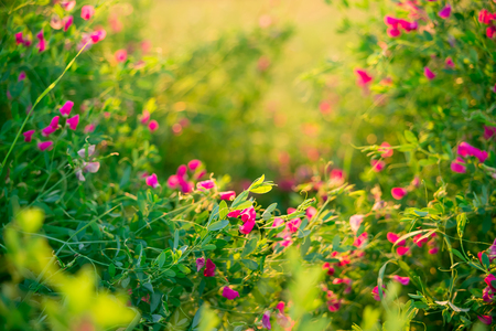 Beautiful landscape with the wilderness of herbs and pink wildflowers. Standard-Bild