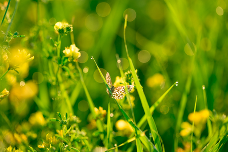 yellow wildflowers: Fresh green grass and yellow wildflowers with water drops on the background of sunlight beams.
