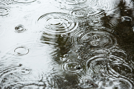 high def: Beautiful backgrounds with falling water drops in a puddle in the rain