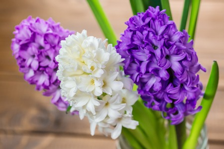 Fresh hyacinth flowers on wooden background. Beautiful idea for greeting cards for Valentines day, March 8 and mothers day