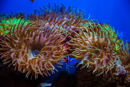 Beautiful live corals on the seabed. Excellent background of the underwater world