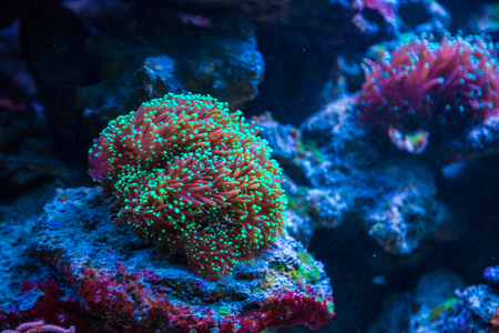 photosynthetic: Beautiful live corals on the seabed. Excellent background of the underwater world