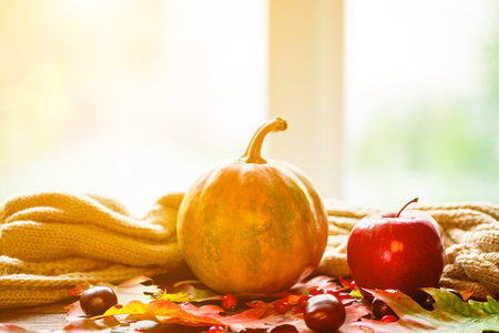 Autumn background with pumpkin, fruits and berries with a bright-colored leaves on the old boards on the window background with copy space. The layout offers and seasonal holiday card