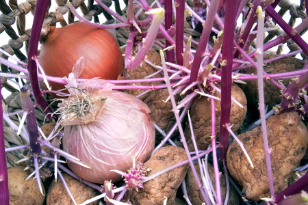 onions with roots in a basket