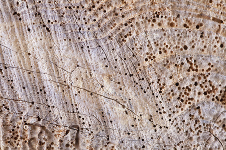 Texture of a piece of wood with holes