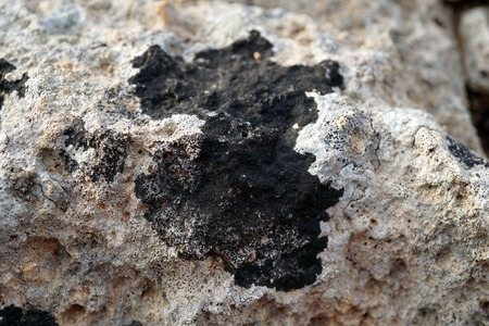 black lichens on the rock,details 写真素材