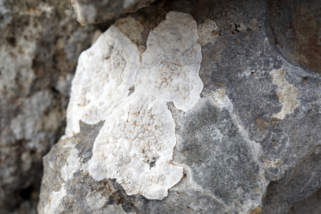 white lichens on the rock,details