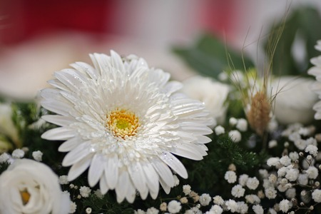 composition of flowers with white daisy,details Stock Photo