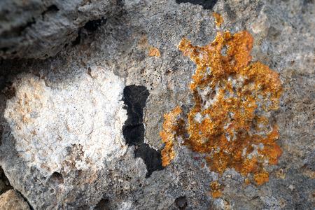white,black and orange lichens on the rock,details