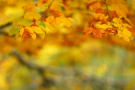 Branches of autumn trees on a blurred bokeh background with copy space