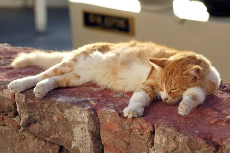 Kitten resting in the sun in Oia, Santorini