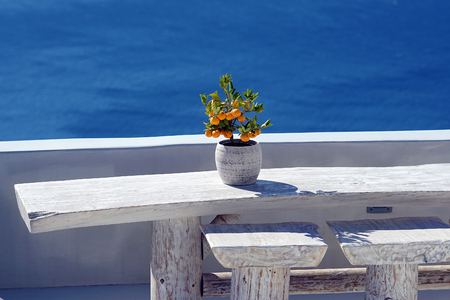 Small orange tree with Oia Scenery as a background in Santorini, Greece