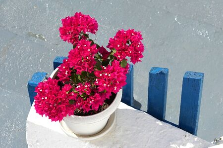 Typical image of the Cyclades islands, red geraniums on a white and blue background in Oia, Santorini Stockfoto