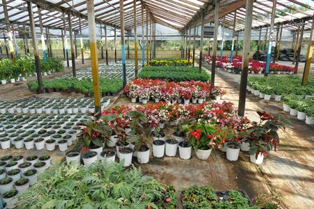 Greenhouses for the cultivation of flowers and plants in Corfu, Greece