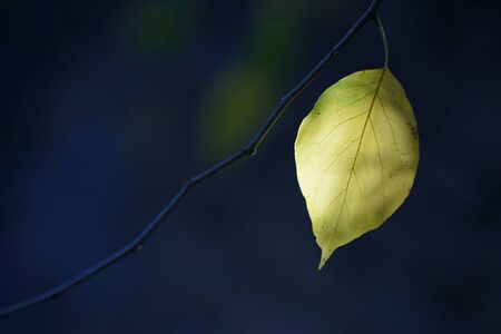 Backlight on a black background of an autumn leaf Stok Fotoğraf - 134753742