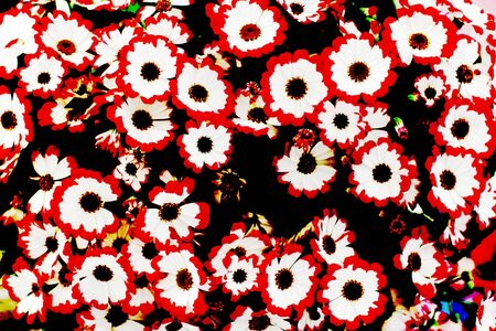 Daisies with white and red petals with posterized colors