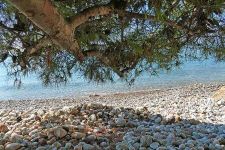 Pine tree leaning towards the beautiful Ververonda beach near the famous tourist resort Porto Heli 版權商用圖片