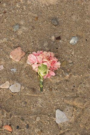 wilted: Wilted Flower in the Sand Stock Photo