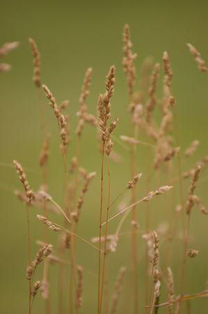 Grass Close-up Stock Photo - 4287996