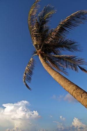 wind blown: Wind Blown Palm