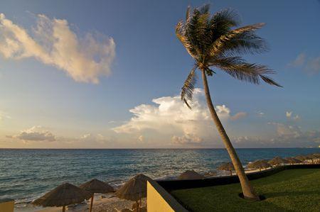Palm Tree and Caribbean Beach at Dawn