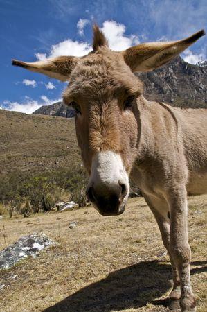 Curious Donkey Stock Photo - 5706592