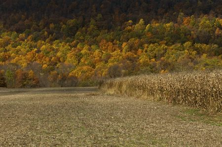 Fall Colors and Crop Stock Photo - 5788918