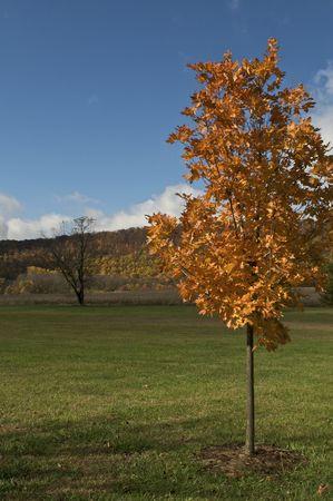Autumn Orange Tree Stock Photo - 5788920