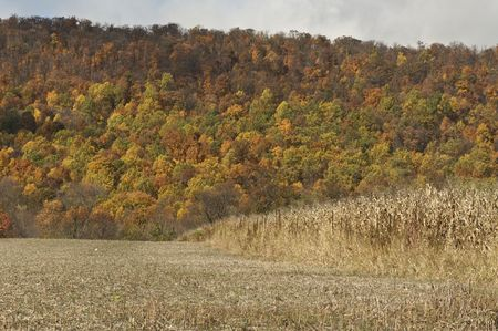 Fall Colors and Corn Crop Stock Photo