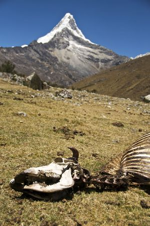 The Skeleton of a Cow with Artesonraju Peak, Peru (basis for Paramount Studios Logo) in the Background Stock Photo - 5928087