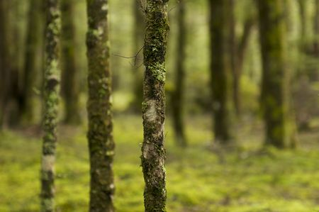 Detail of an Intensely Green Forest in New Zealand Stock Photo