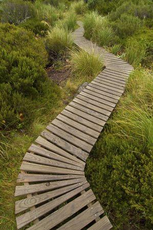 A boardwalk winds through a lush wetland Stock Photo