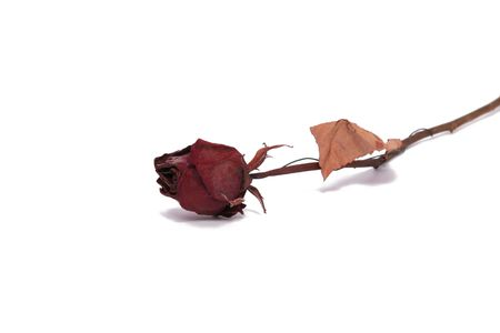 A dried rose flower isolated on a white background Stock Photo