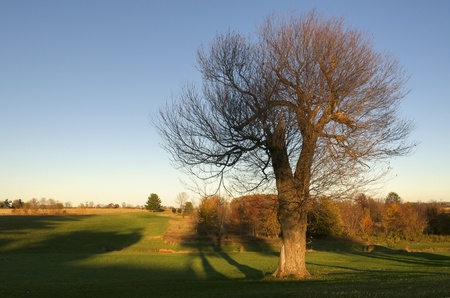 A single tree that has lost most of it's leaves in autumn Stock Photo - 11143013