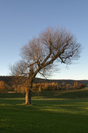 A single tree that has lost most of its leaves in autumn Stock Photo