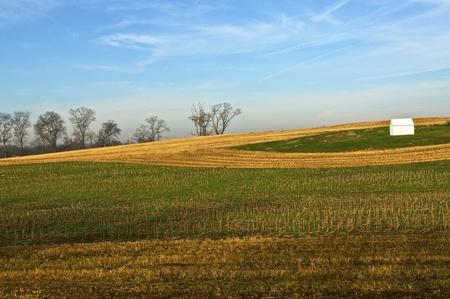 A cornfield after harvest set against a blue sky