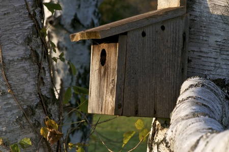 A closeup of a birdhouse attached to a tree