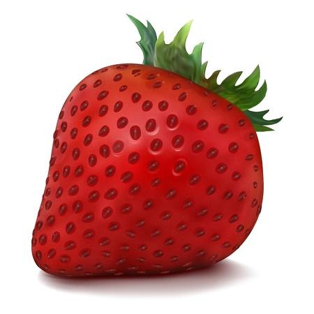 Vector Strawberry isolated on white background Illustration