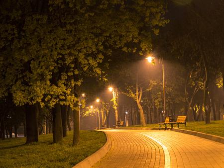 Magic night alley  Green trees, road, shiny lantern lights, empty benches