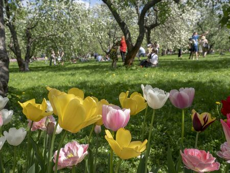 In spring, the garden blooms a wide variety of tulips
