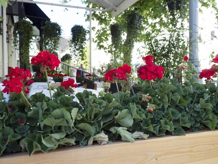 The restaurant is decorated with beautiful flowers outdoor area