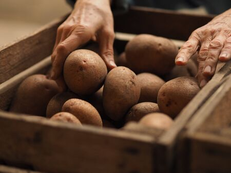 An elderly woman in the market with her own hands puts agro-potatoes in a box, selective focus
