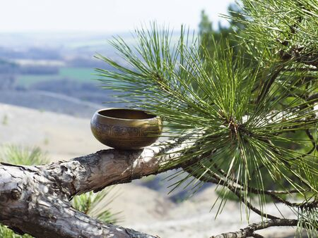 the singing bowl is located on a tree branch