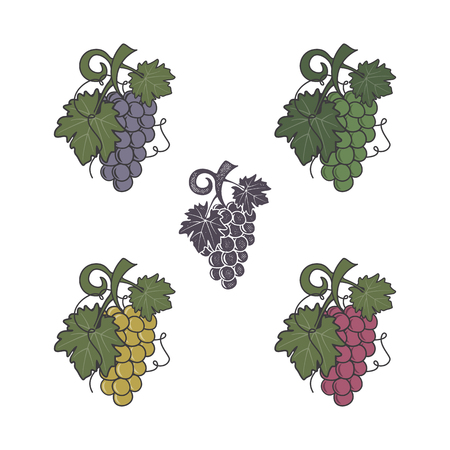 Set of grapes icon. Different colors and style. Flat, retro letterpress effect. Friut symbol for logo, label or badge. Stock vector illustration isolated on white background