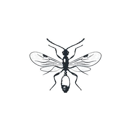 insect silhouette Foto de archivo - 113705998