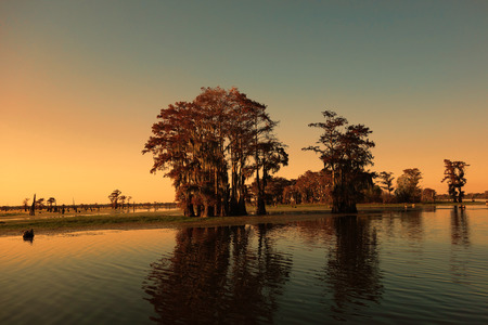 Bayou en cipressen in de buurt van Henderson, Louisiana. Een deel van de Atchafalaya bekken. Stockfoto
