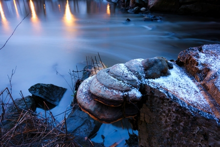 bourn: Tree stump with fungus and little snow flakes by the small river in Helsinki Finland with reflections from the park lights in the water surface Stock Photo