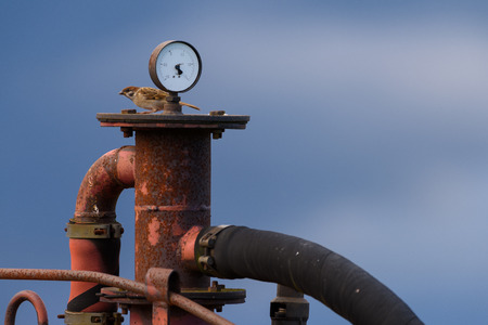 air pressure: Sparrow sitting behind meter and on top of a red and rusty old machine used for checking air pressure on early evening in August in Helsinki, Finland. Stock Photo