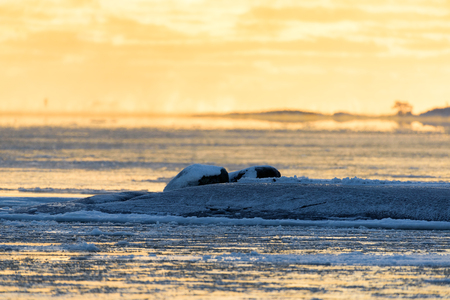 Golden light before sunset on icy Baltic sea in Helsinki, Finland at the beginning of January 2017.