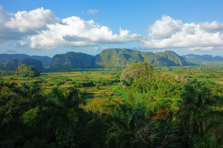 Lush green nature of the Valle de Vinales in Pinar del Río Province in Western Cuba in evening light on 20 December 2013.